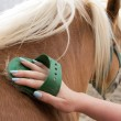 Stock Photo: Horse grooming