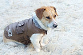 Dog jacket — Stock Photo