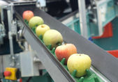 Apple conveyor belt — Stok fotoğraf