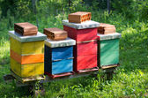 Beehives — Stockfoto