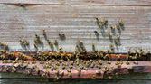 Arı kovanı — Stok fotoğraf