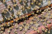 Beehive — Photo