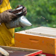 Apiarist working with smoker — Stock Photo