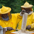 Apiarist — Stock Photo