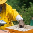 Stock Photo: Apiarist working with smoker