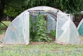 Greenhouse in garden — Foto Stock