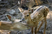 Doe and fawn — Stock Photo