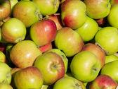 Manzanas aidared — Foto de Stock