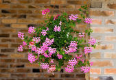 Flowers in hanging pot — Stock Photo