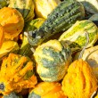 Squash on sale — Foto Stock
