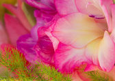 Gladiola blossom — Stock Photo