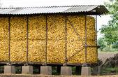 Storage for corncobs — Stock Photo