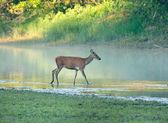 Wildlife — Stock Photo