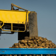 Sugar beet loading — Stock Photo