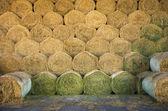 Hay bales — Stock Photo
