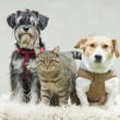 Pet family — Stock Photo