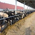 Modern dairy farm — Stock Photo #35651015