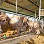 Modern dairy farm — Stock Photo #35651227