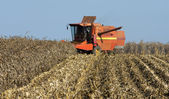 Combine harvesting corn — Stock Photo
