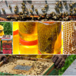 Honey production collage — Stock Photo