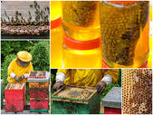 Honey production collage — 图库照片