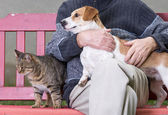Man with dog and cat — Stock Photo
