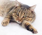 Cuddly cat — Stock Photo