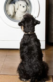 Dog looking at washing machine — Stock Photo