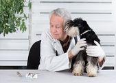 ветеринар с собакой — Стоковое фото