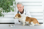 Dog examination — Stock Photo