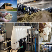 Dairy industry — Stock Photo