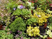 Plants in pots — Stock Photo