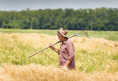 Working in barley field — Stock Photo
