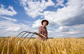 Working in barley field — Stock Photo