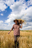 Old man in barley field — Stock Photo