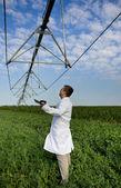 Agronomist in peas field — Stock Photo