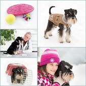Dog care collage — Foto Stock