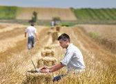 Harvesting — Stock Photo