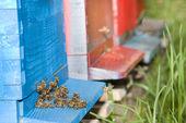 Bees — Foto Stock