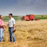 Harvesting — Stock Photo #50954861