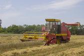 Harvesting combine in the field 3 — Stock Photo
