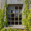 Broken window with vines — Stock Photo