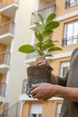 Hand carefully plant 4 — Stock Photo