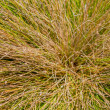 Multicolored grass clump background — Stock Photo