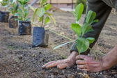 Garden worker hands carefully plant — Stock Photo