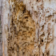Damage to wood by insects 2 — Stock Photo #37092155