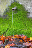 Clean fresh water from water source with green moss — ストック写真