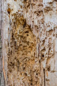 Damage to wood by insects 2 — Stock Photo