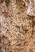 Wooden background with termite holes — Stock Photo