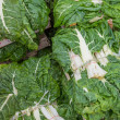 Fresh organic collard greens — Stock Photo